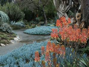 Blue chalk sticks succulent hello hello plants amp garden supplies