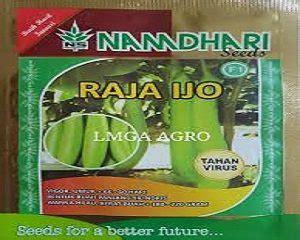 Benih Terong Ungu Tahan Virus 4 jenis benih terong terbaik dan tahan penyakit untuk