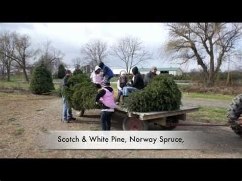 cut your own christmas tree at mayne s tree farm in