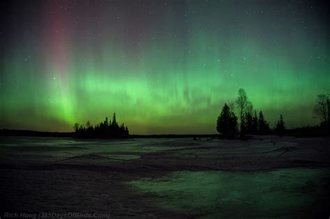 minnesota northern lights viewing and photography 365