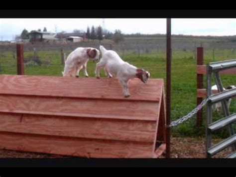 Low Cost Goat Shed new goat shed funnydog tv