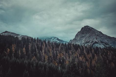 Archlabs trees and mountains 4k hd nature 4k wallpapers images