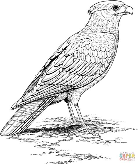 falcon coloring page free printable coloring pages