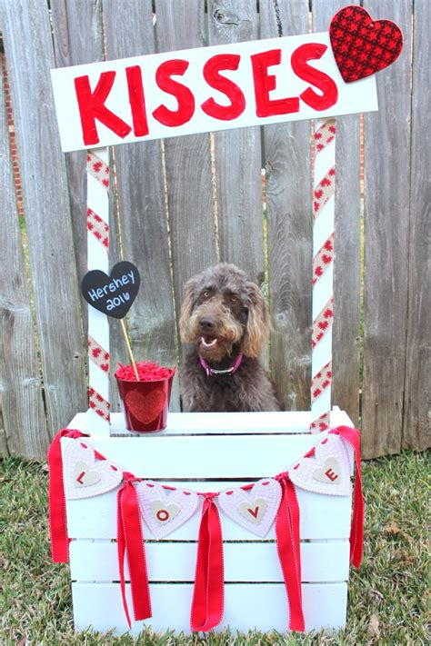 dogs in photo booth 25 best ideas about booth on photo props lemonade stand