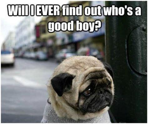 Sad Animal Memes - 20 hilarious animal memes that will make you lol