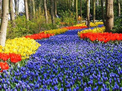 imagenes de jardines trackid sp 006 world top pictures keukenhof