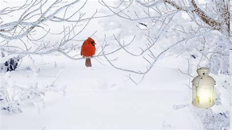 winter cardinal wallpapers full hd earthly wallpaper p