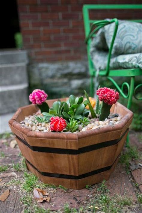 diy succulent projects succulent diy garden projects allfreeholidaycrafts