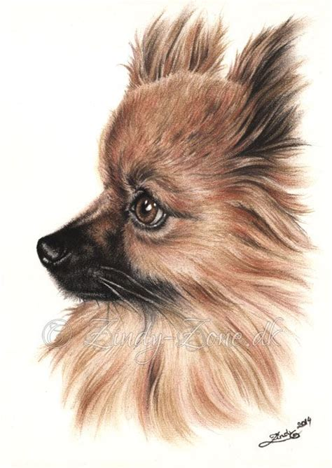 how to draw a pomeranian 25 best ideas about colour drawing on s way color pencil