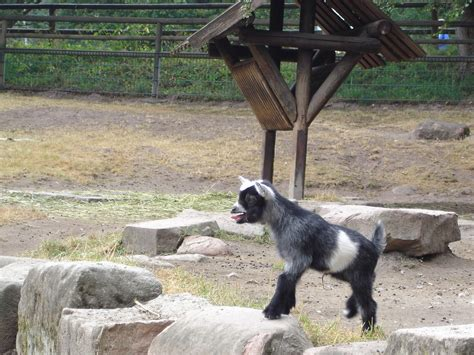 giardino zoologico vienna il giardino zoologico ed il trenino parco a sch 246 nbrunn