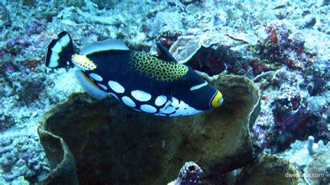 bunaken island dive resort bunaken island dive sulawesi indonesia