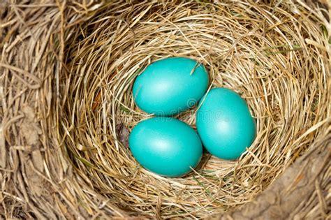 blue eggs bird www pixshark com images galleries with
