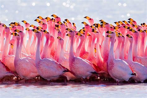 pink flamingos pink flamingos birds inspiration photos