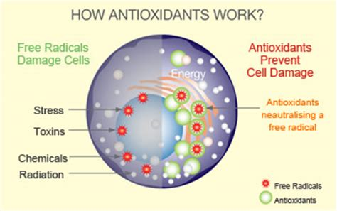 Do Antioxidants Help With The Prevention Against Aging by Opcxtra The Benefits Of Antioxidants Optihealth