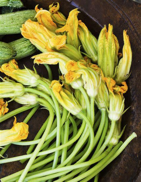 pastella x fiori di zucca fiori di zucca fritti idee per pastella e ripieno le