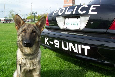 police dog 5 k9 careers that benefit society