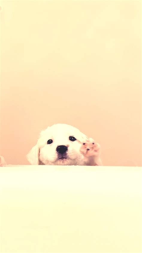 white puppy   android wallpaper