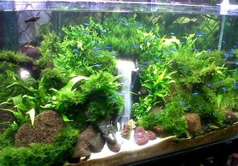 membuat air terjun  aquascape bagus satria