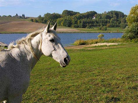 imagenes de paisajes y caballos el paisaje con el caballo animales fotos foto paisajes