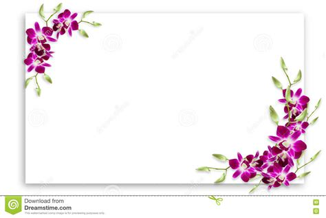 orchideen gestell orchid flowers frame with white copy space stock image