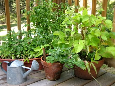5 Things to Grow Herb Plants for Apartments