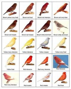 Essay On Different Types Of Birds In by Types Of Birds Weneedfun