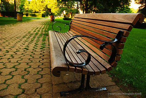 a bench in the park what do you see 171 real zone