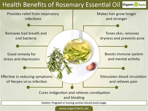 Medicinalcosmetic Uses Of Rosemary by 11 Amazing Benefits Of Rosemary Organic Facts