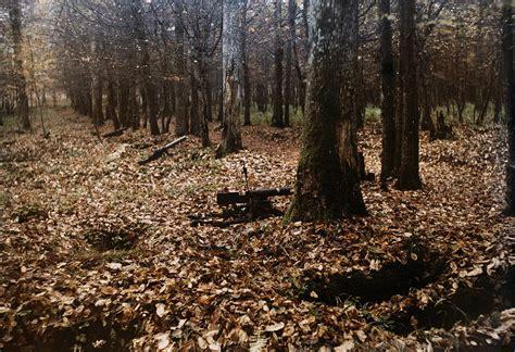 belleau woods a view of belleau wood battlefield photograph by gervais
