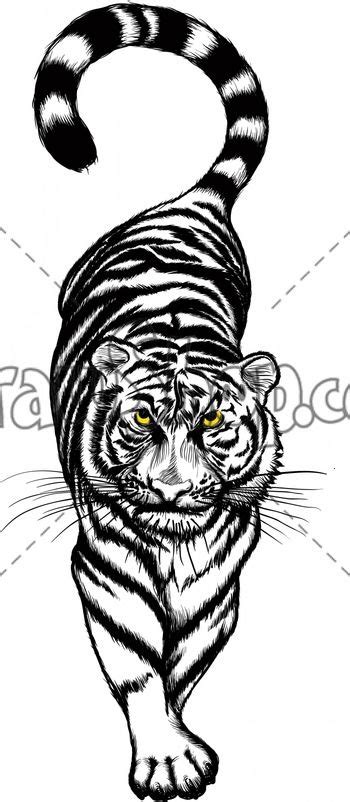 cartoon realism tattoo tiger paw prints walking drawing drawshop royalty free