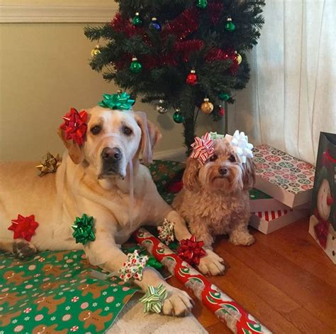 cute dogs   christmas visit  poster store rovercom dog christmas pictures
