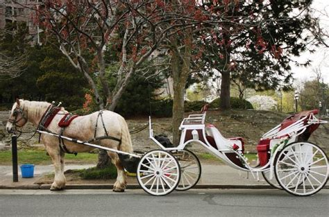 Private Horse and Carriage Ride in Central Park   New York
