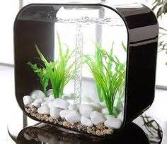 Fish tanks i would die for
