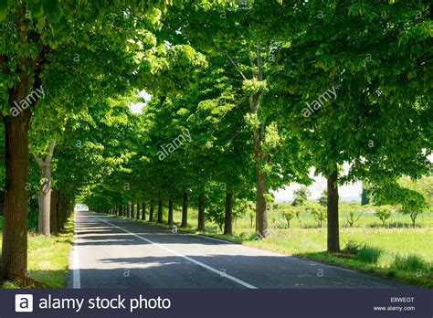 7 trees that look great in both the fall and the winter view of a road with trees on both sides creating an empty green stock photo royalty free