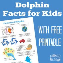 dolphin facts for kids itsy bitsy fun