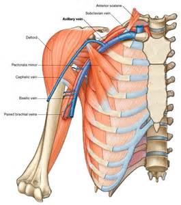 Upper limb deep vein thrombosis the sports physio