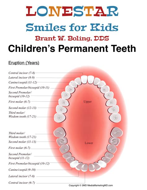 children s teeth diagram permanent tooth eruption lonestar smiles for