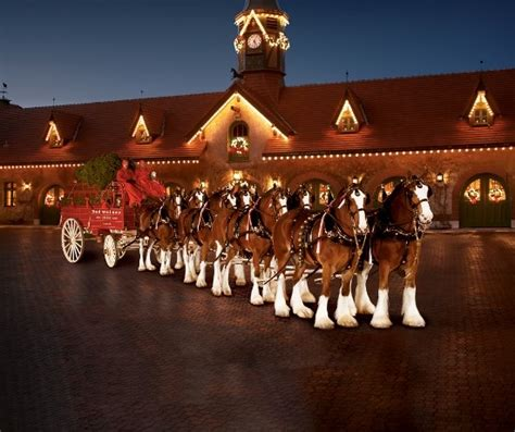 budlight xmas commercials the five most memorable budweiser clydesdale commercials the horses are leaving fort collins