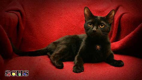 sheboygan humane society golden retrievers krro pets