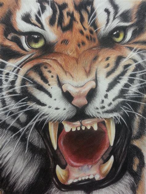 tiger colors colored pencil tiger by mattmayers8 on deviantart