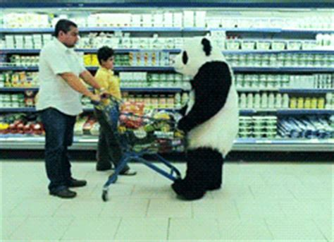 panda bear gif find & share on giphy
