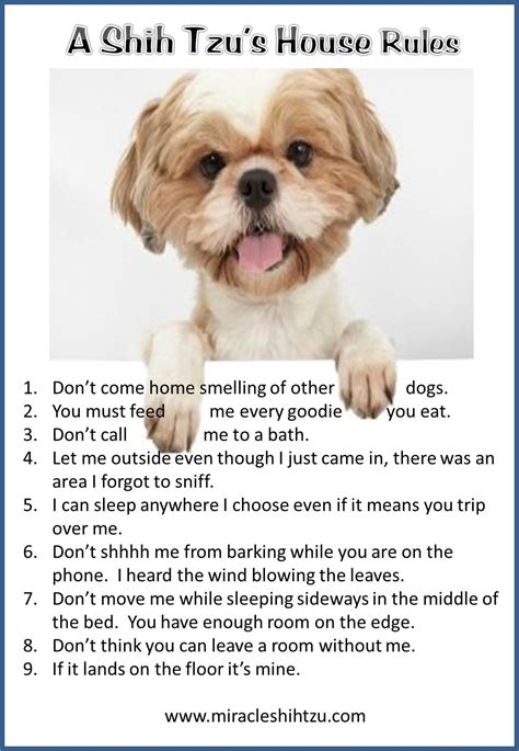 what is shih tzu favorite food our favorite quotes