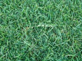 the 3 most common grass types in jacksonville fl