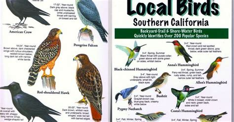 southern birds backyard guide southern california birds google search california