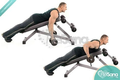 reverse grip bench reverse grip incline bench two arm dumbbell row
