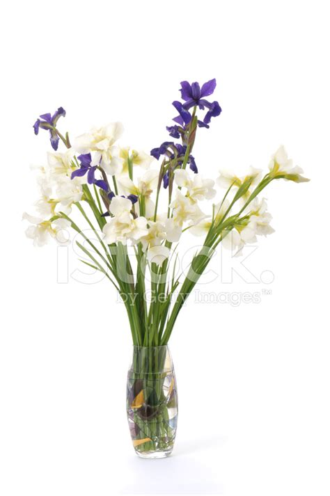 Iris Vase by Flowers In Vase Iris On White Background Stock Photos