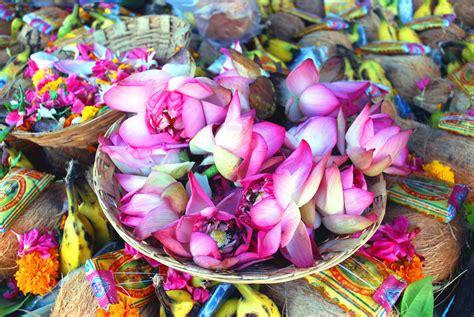 lotus flower india file indian lotus flowers jpg wikimedia commons
