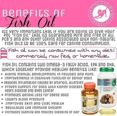 benefits of fish for dogs benefits of fish for your pets your benefits of and fish