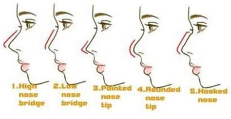 what does it if a s nose is nose types search rhinoplasty