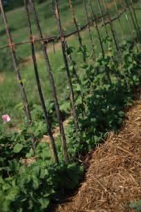 Pole Bean Trellis Designs Ewa In The Garden 14 Ideas For Bean Poles Inspirational